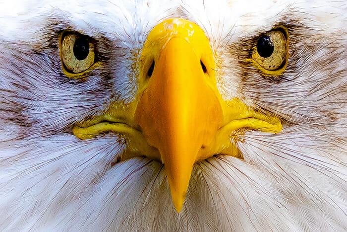 close up macro bird photography