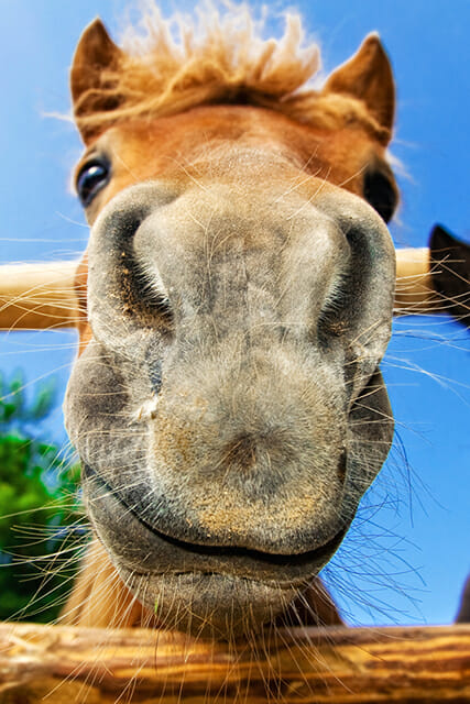 happy horse long nose wide angle lens photography low angle