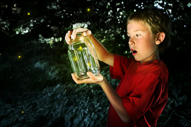 boy jar mason glass looking captured insect awe woods outdoor learning pet portrait