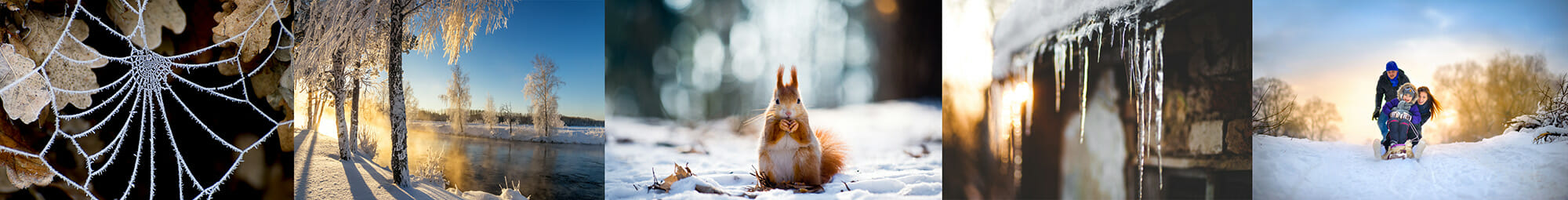 winter snow landscape squirrel family cold christmas trees cobweb frost