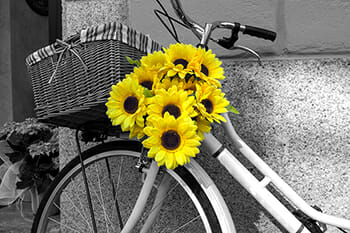 flowers yellow bicycle colour splash