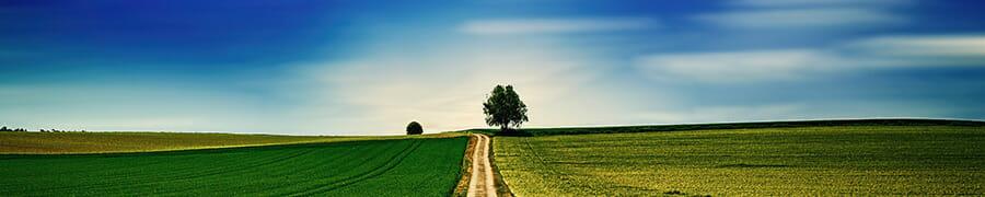 landscape with tree on horizon