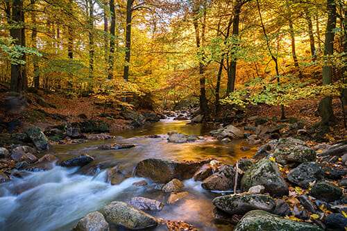 long exposure stream of water autumn foliage red orange green yellow leaves