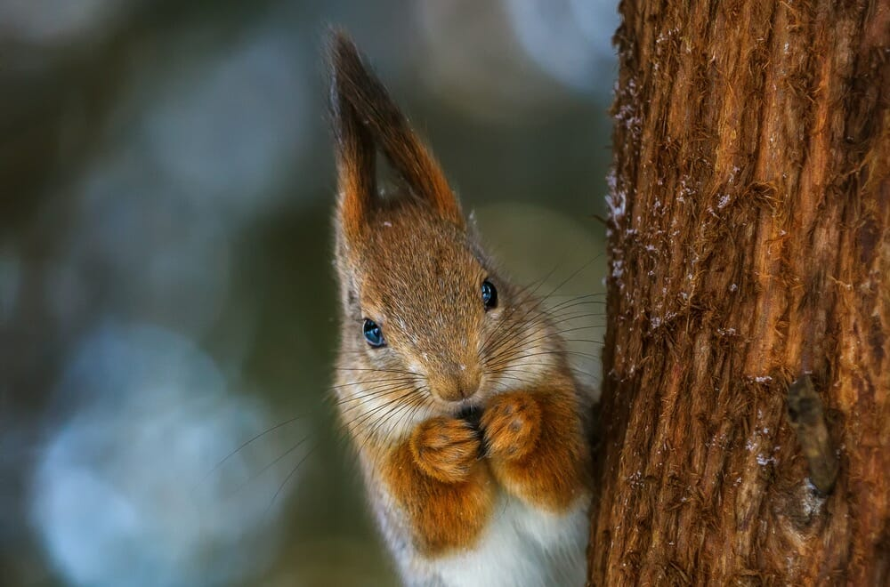 Photographing Squirrels Online Photography Courses From Iphotography