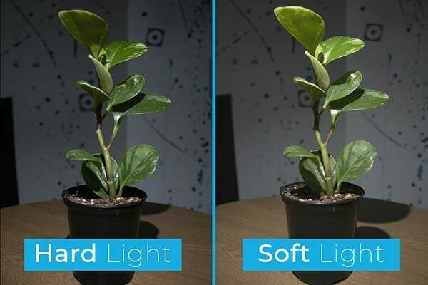 soft hard light comparison on plant