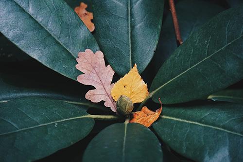 story of an orange leaf on green leaves wide depth of field