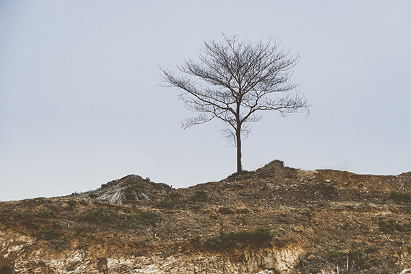 story of a lonely tree on a hill photo stories