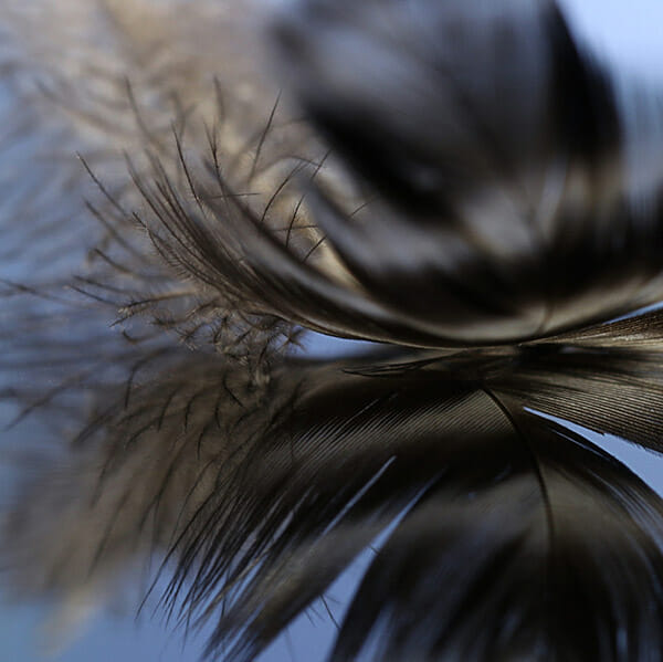Harrison, iPhotography student, iPhotography course, how to take abstract photographs, copyright, 2020