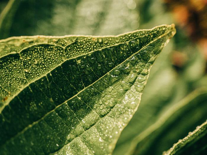 macro of a leaf expensive camera equipment