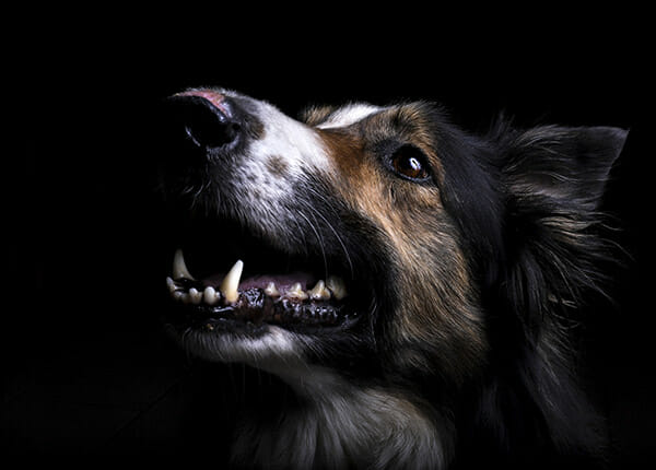 dog photography by janine nimmo copyright 2020