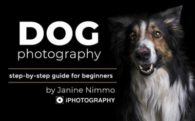 Dog Photography by Janine Nimmo