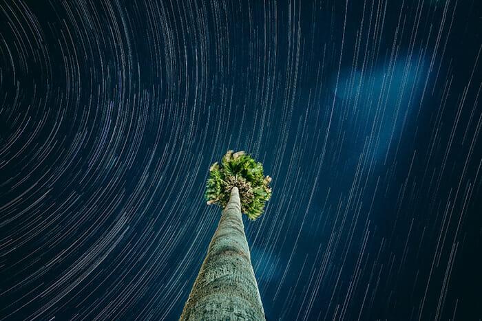star trails around a palm tree