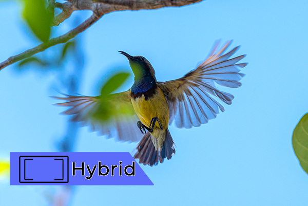 how to focus hybrid focus bird example iphotography