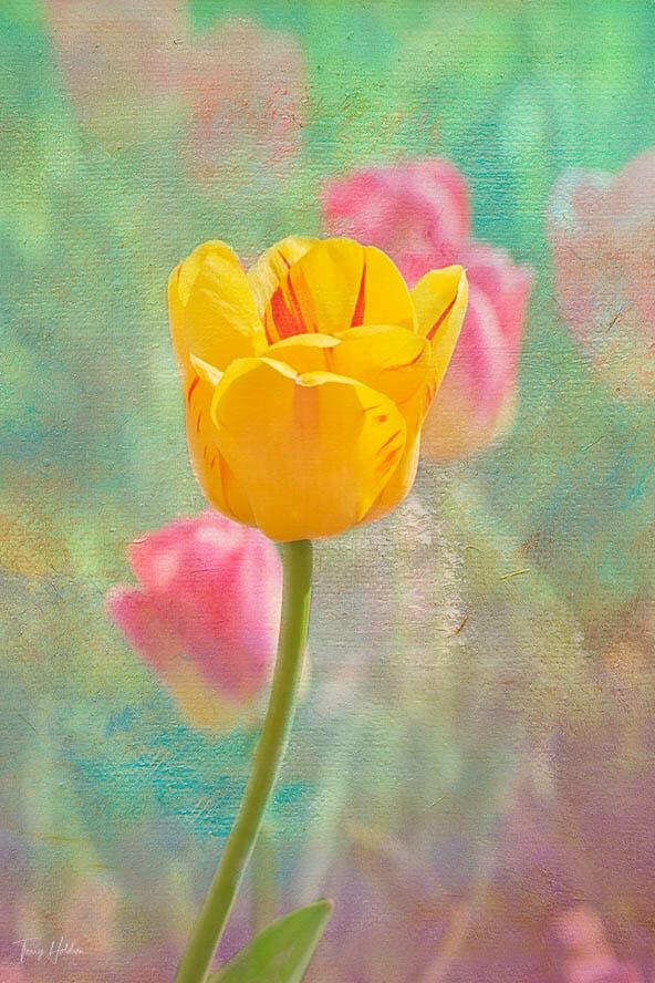 Copyright Terry Holdren 2020 iPhotography Textured flower photos 5