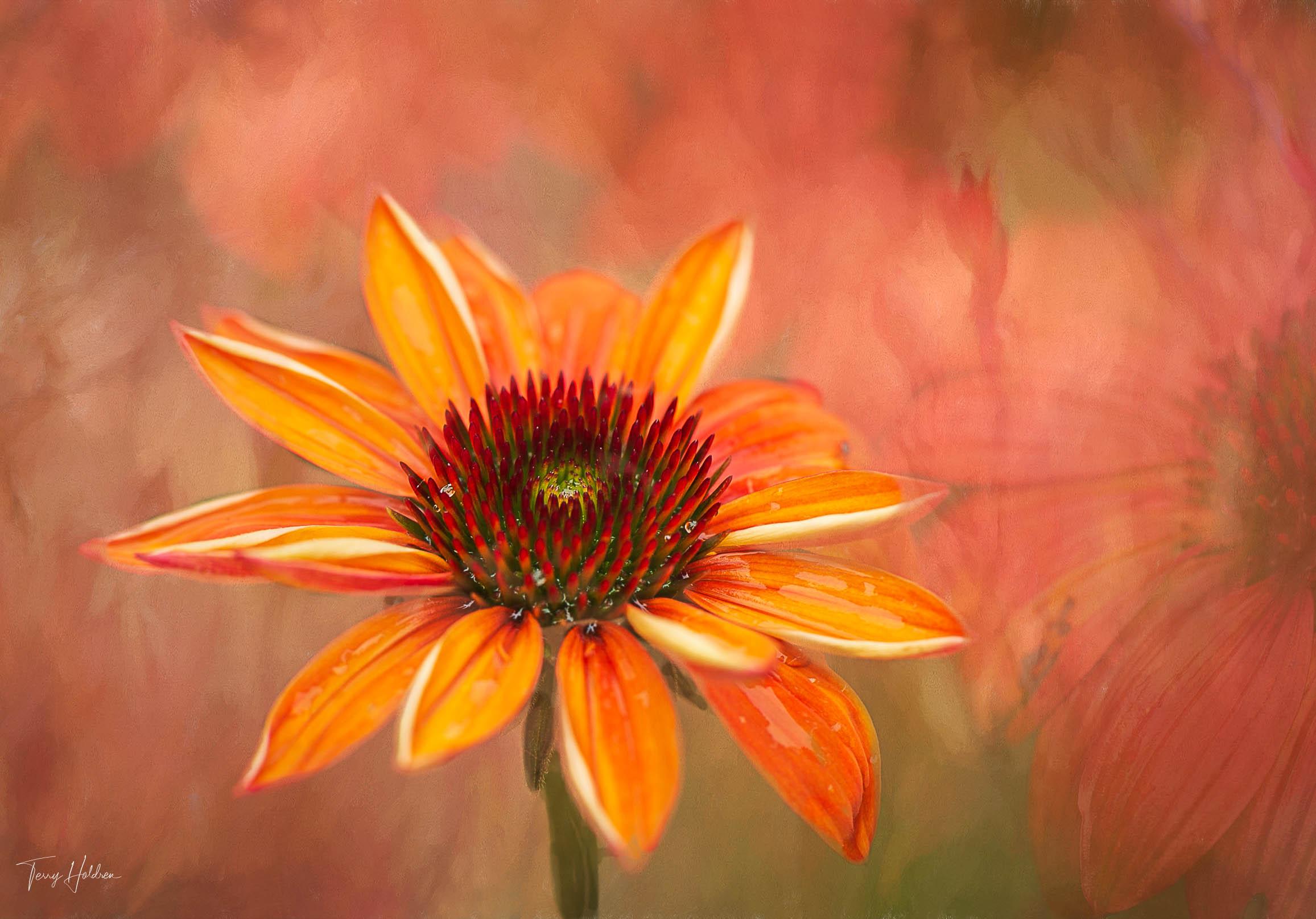 Copyright Terry Holdren 2020 iPhotography Textured flower photos 1