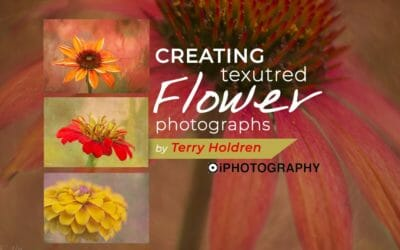 Flower Photos: Textural Creations by Terry Holdren