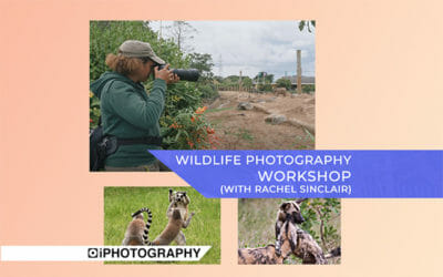 Wildlife Photography Workshop: Meet Rachel Sinclair