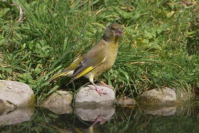 rachel sinclair bird hide photography tips iphotography