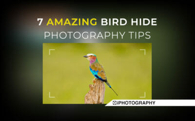 Bird Hide Photography: 7 Quick Tips