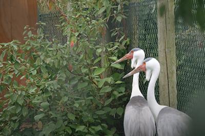 iphotography zoo photos herons cranes
