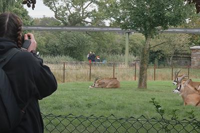 iphotography zoo photos tutor rebecca