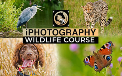 Wildlife Photography Course: What You Need to Know