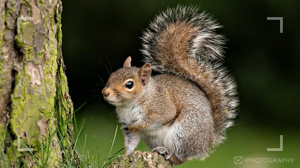wildlife photography webinar Squirrel