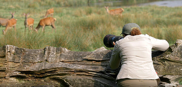 Rachel Sinclair capturing deer images