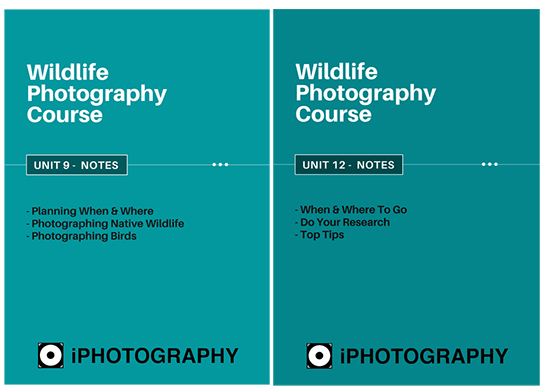 wildlife photography course module notes