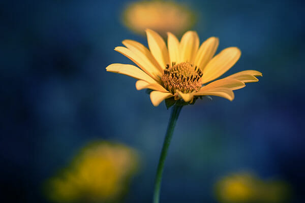 Flower Photography shallow depth of field