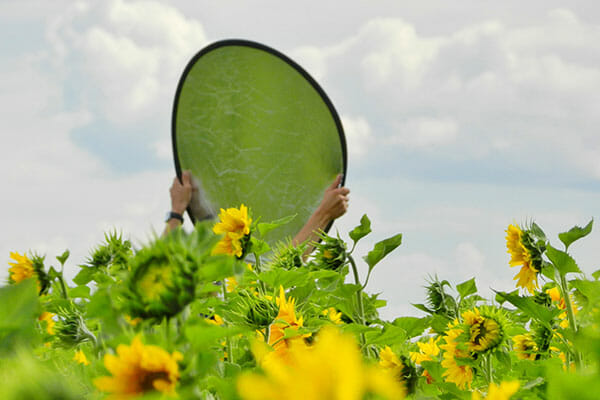 Flower Photography holding up a reflector in field of sunflowers photography