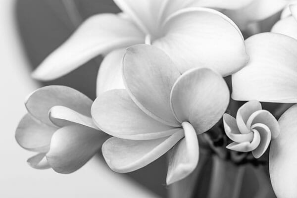 Flower Photography b&w black and white flower petals