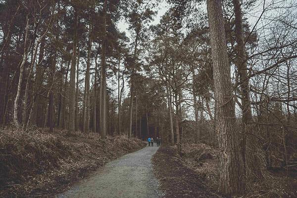 Woodland Photography Tips 1