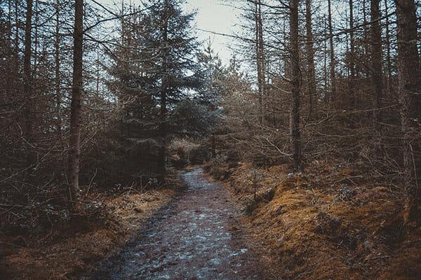 Woodland Photography Tips 2