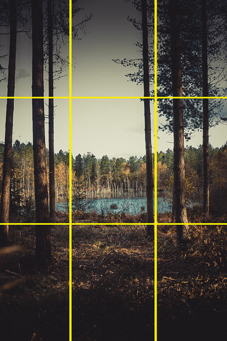 Woodland Photography Tips rule of thirds example