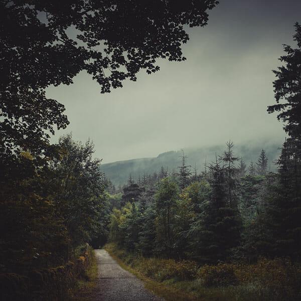 Woodland Photography Tips 8