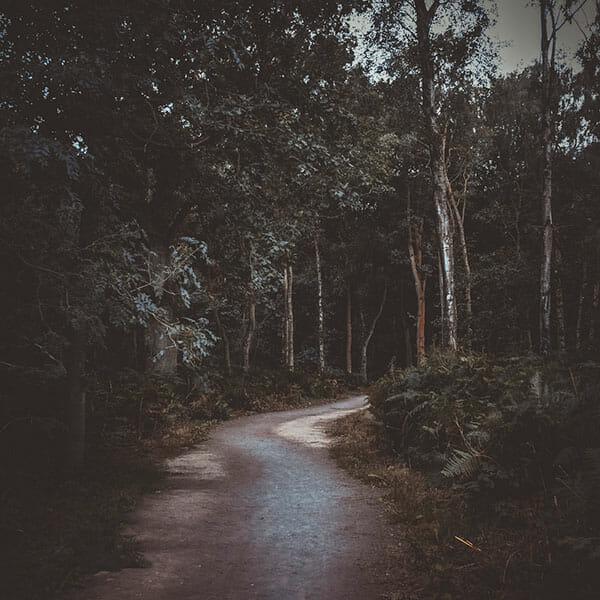 Woodland Photography Tips 9 woodland path