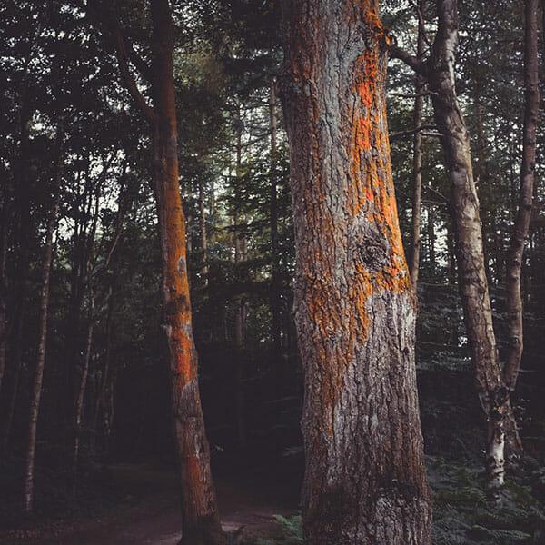 Woodland Photography Tips 10 trees