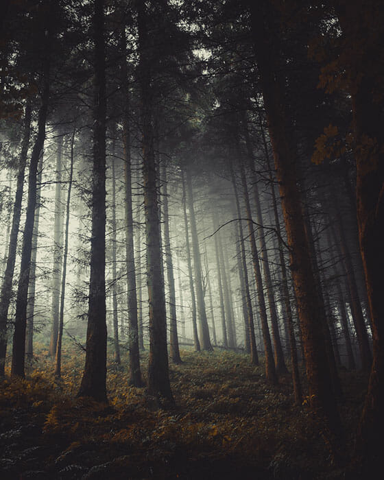 Woodland Photography Tips 17