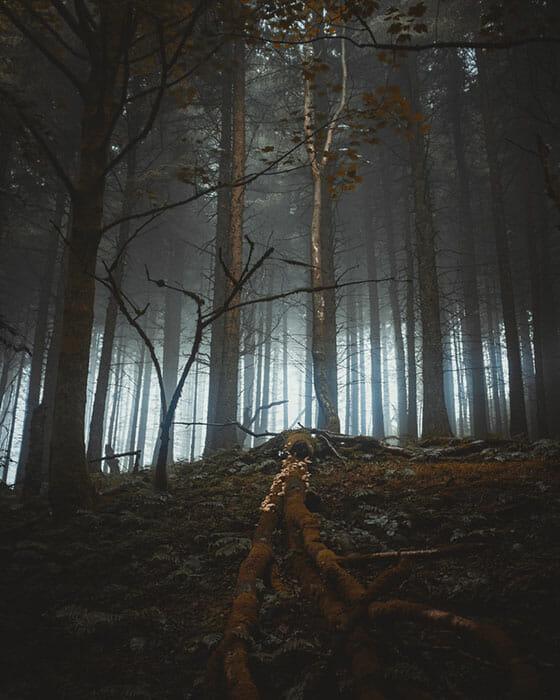 Woodland Photography Tips 18