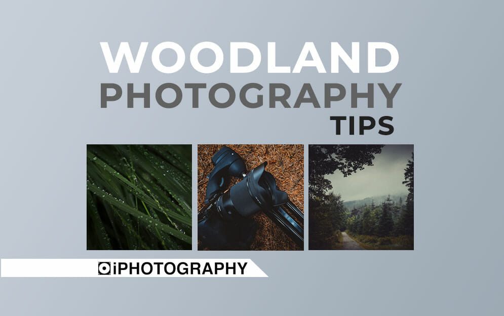 woodland photography