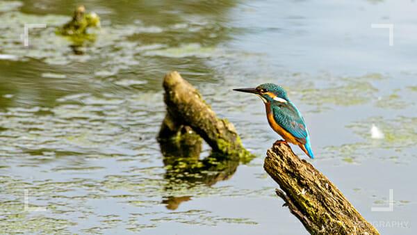 Bird photography tips 3