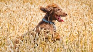 pet photography blog dog action shot 1