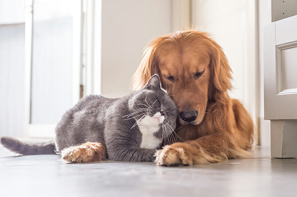 pet photography cat and dog lying down together