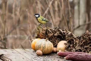 spring photography tips bird on pumpkin 4