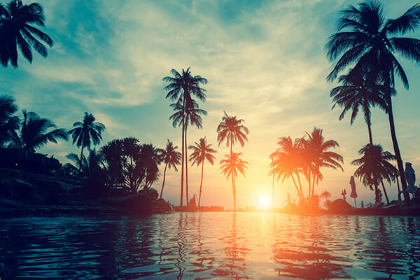 pool at sunset with palm trees