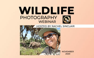 Wildlife Course Webinar (11 November 2020)
