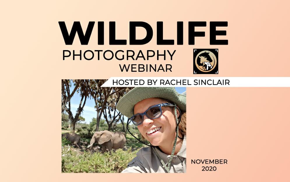 wildlife photography webinar november 2020 Blog