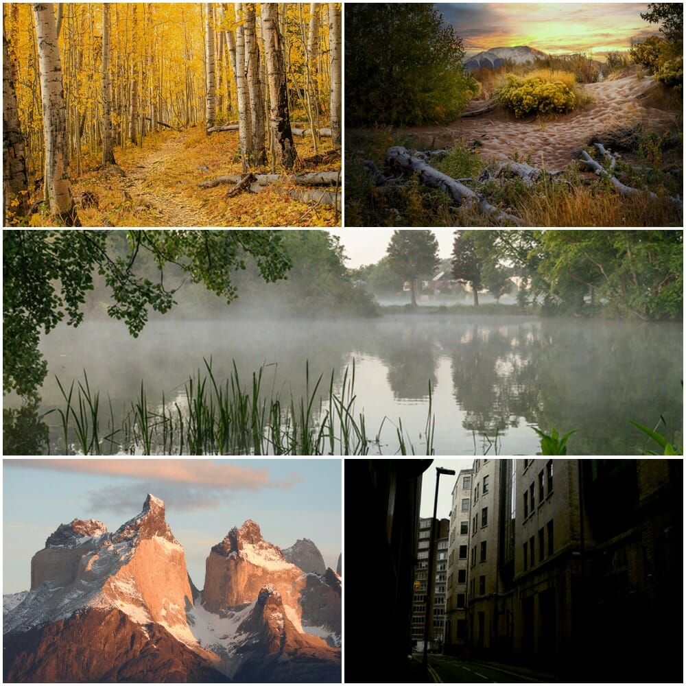 wildlife photographs shortlist member awards 2020