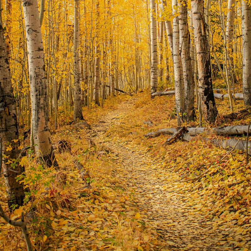 landscape photographs janice-richardson